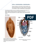 FASCIOLA HEPATICA COLCHISITO.docx