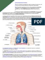 El Aparato Respiratorio Humano 8º Basico