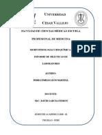 Informes2 Prácticas Laboratorio Morfofisiologia I