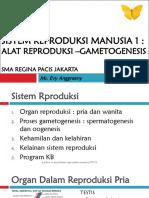 Sistem Reproduksi Manusia 1_organ Reproduksi - Gametogenesis_sma_2013