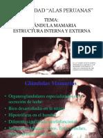 295904631 4 Glandula Mamaria Estructura Interna y Externa