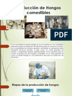 Producción de Hongos Comestibles