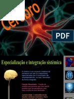 30469532-Cerebro