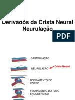 Complemento Usp Crista Neural 2018