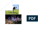 Vaca y Feria