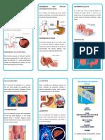 TRIPTICO enfermedades estomacalesr.docx