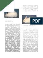 California_y_Razas_de_Conejos_Publicaci_n.pdf