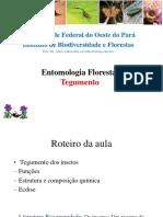 Morfologia Externa - Tegumento