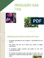 01_REP_PLANTAS_1