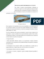 Diseño de Monitoreo de Macroinvertebrados Acuáticos (1)