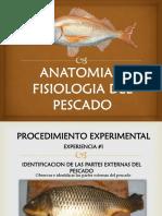 Anatomia y Fisiologia Del Pescado