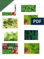imagenes imprimir reino plantae.docx