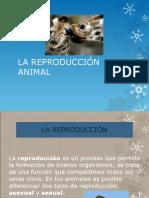 La reproducción animal.pptx