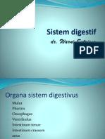 Sistem Digestif