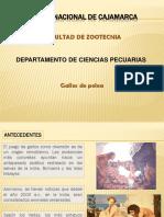 GALLOS-DE-PELEA-ok.pptx