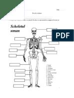 Sistemul Osos Și Cel Muscular - Exerciții