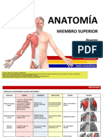 176475825-ANATOMIA-Miembro-Superior-pdf.pdf