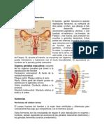 Órganos genitales