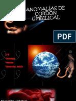 Hernndezngeles Anomaliasdecordnumbilical 150826014201 Lva1 App6892