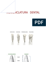 NOMENCLATURA DENTAL2