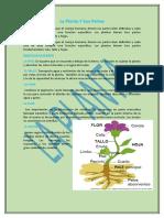 plantas TRABAJO.doc