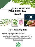 Reproduksi Vegetatif Tumbuhan