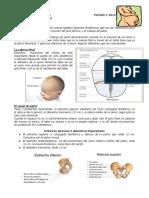 6. Pelvis Obstetrica