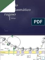 2018 BIOLOGIA Retículo Endoplasmático Rugoso