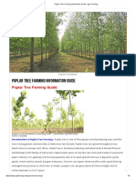 Poplar Tree Farming Information Guide _ Agri Farming.pdf