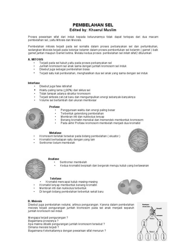 Pembelahan sel mitosis dan meiosis ccuart Gallery