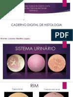 Caderno Digital Histologia