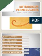 ENTEROBIUS-VERMICULARIS
