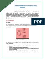 Informe estructura de semillas.docx