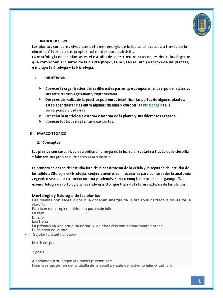 Hermosa Morfología De La Planta Y La Anatomía Colección - Anatomía ...