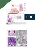 mikroskopik intestinum.pptx