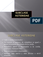 Subclase Asteridae