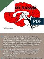 Veliki Mozak Prezentacija