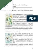 Beltran Anglada, Vicente - Ilustraciones Del Libro de Los Devas 1