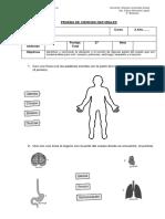 prueba intermedia ciencias.docx