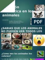 La Visión Cromática en Los Animales EXPOSICION