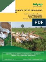 Alimentación Del Pie de Cría Ovino en Yucatán.