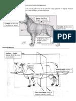 94909961-resumen-osteologia-bovina.doc