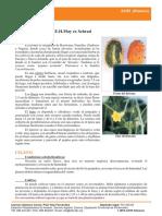 Ficha23_Cucumis_metuliferus.pdf
