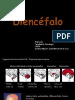 112505956-Diencefalo-Estructuras-y-Funciones.pptx