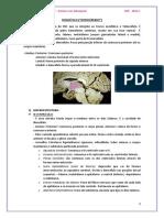 Diencefalo PDF