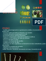 Hormona-de-etileno.pptx