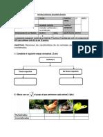 Prueba Ciencias Naturales Animales Vertebrados e Invertebrados