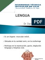 anatomalengua-110130140702-phpapp01.pptx