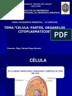 Celula y clases