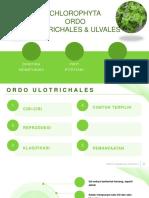 Bocryp Ulo&Ulva